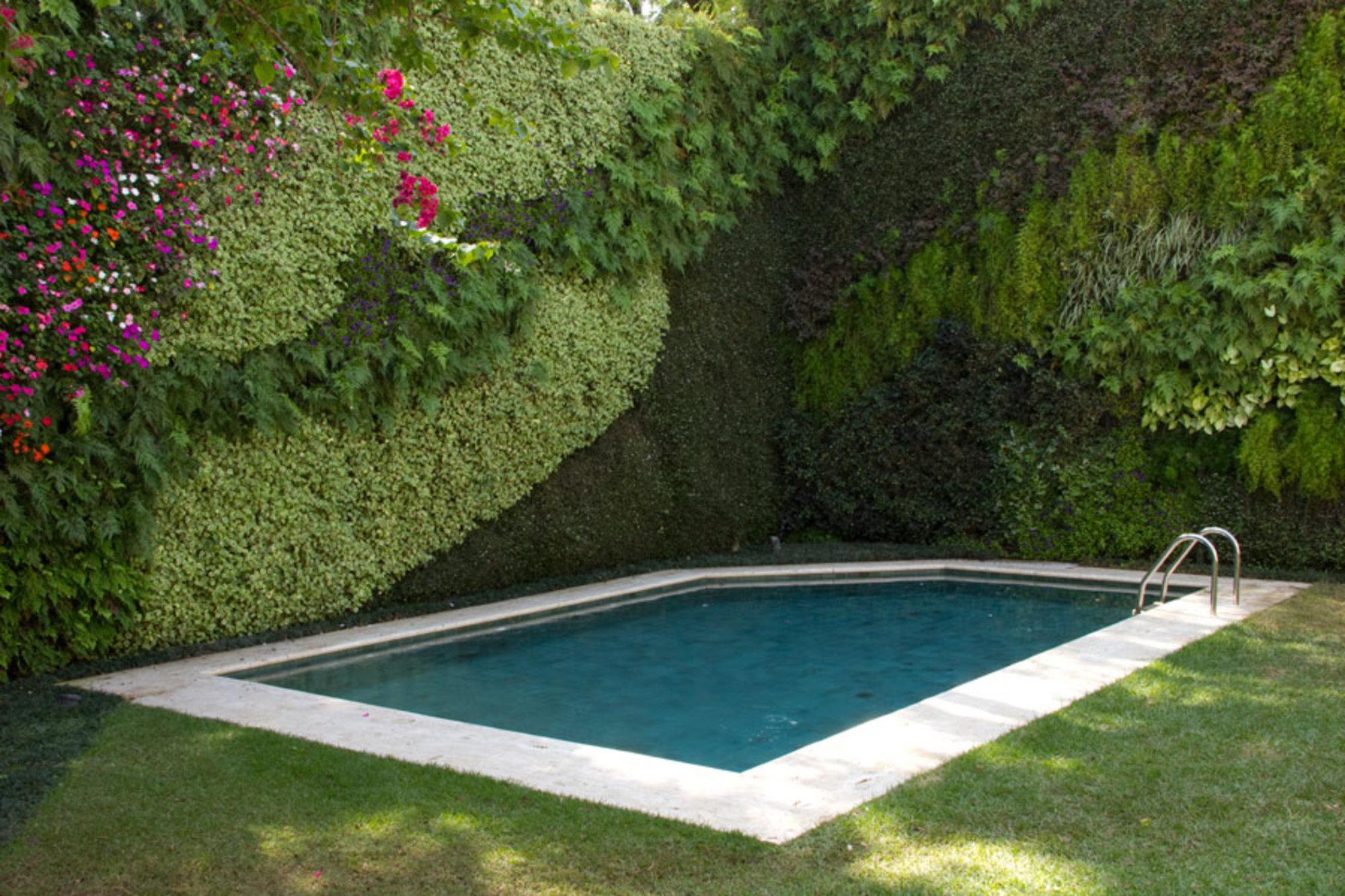 jardim vertical no muro : jardim vertical no muro:JARDIM VERTICAL EXUBERANTE