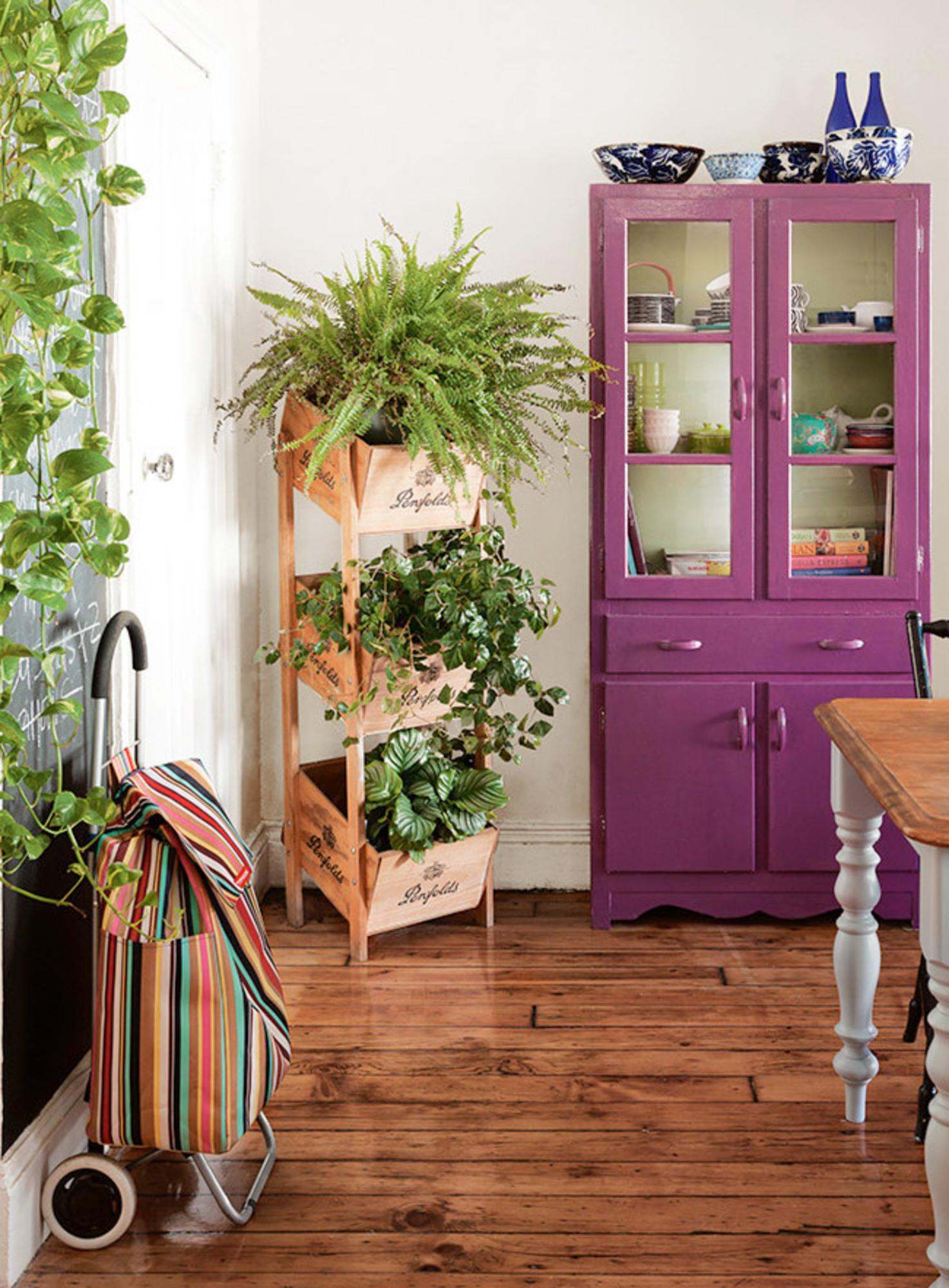 Plantas dentro de casa casa de valentina for Plantas de casa para interior